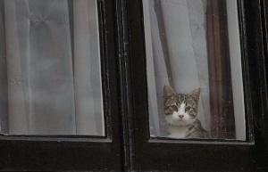 E_Cat